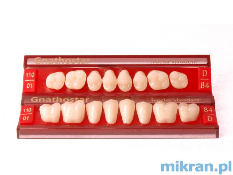 Gnathostar Zęby boczne Promocja