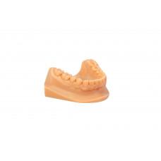 Dreve drukowany model 3D (stereolitografowy) - model ortodontyczny (dół) z podstawą