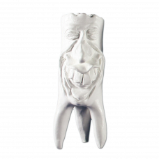 Gypsum teeth Hinrichs tooth collection '' Rudi ''