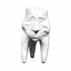Gypsum teeth Hinrichs tooth collection '' Clement ''