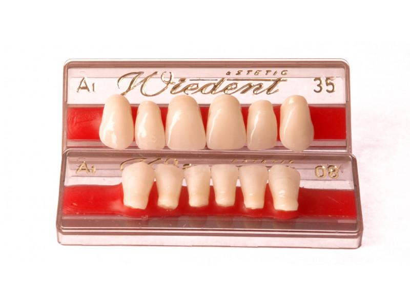 Front teeth WIEDENT 6 pcs
