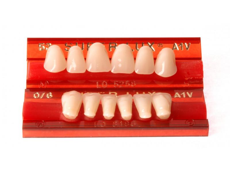 Zęby przednie Major Super Lux  6 szt