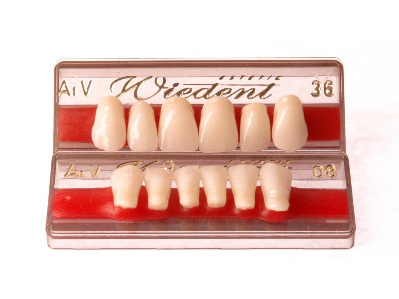 Zęby przednie WIEDENT wg. Vity 6szt