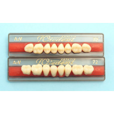 WIEDENT posterior teeth acc. Vity 8pcs