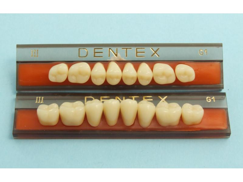 Zęby boczne Dentex 8szt