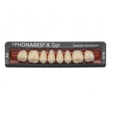Phonares Typ II zęby kompozytowe boczne. Dostępne na zamówienie